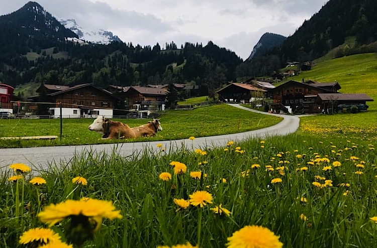 Countryside  / Окрестности